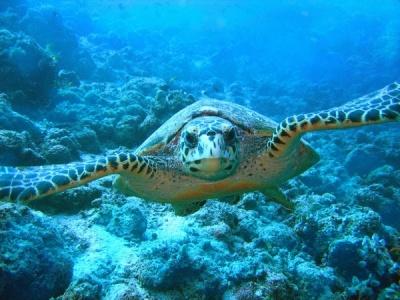 tartaruga lavorata psd e convertita soluzione_tn.jpg
